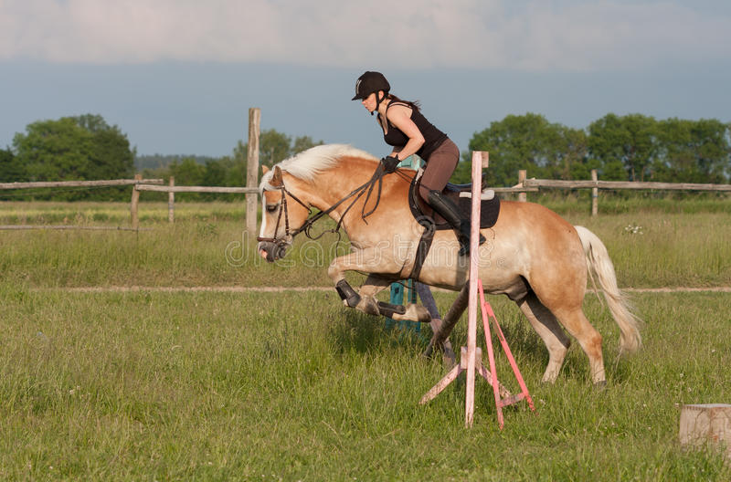 A young woman jumping over hurdle on a horse Haflinger stock photo