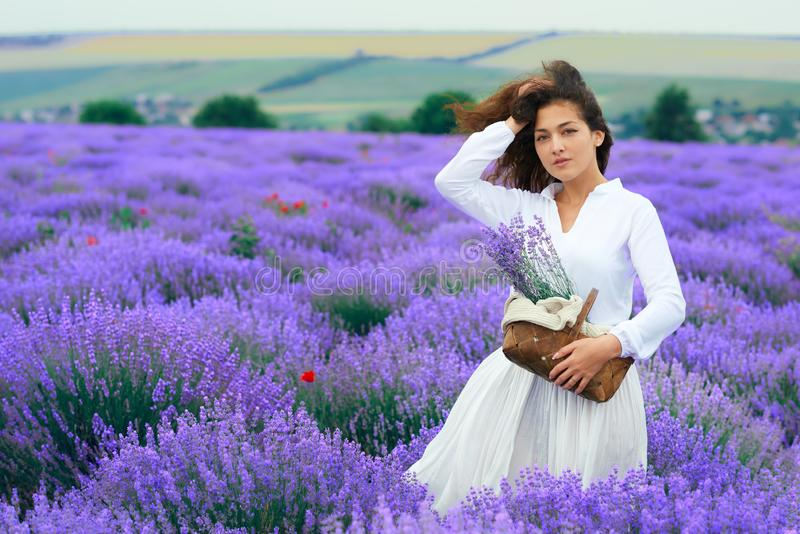 Young woman is in the lavender flower field, beautiful summer landscape stock photos