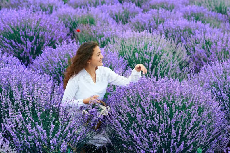 Young woman is in the lavender flower field, beautiful summer landscape royalty free stock images