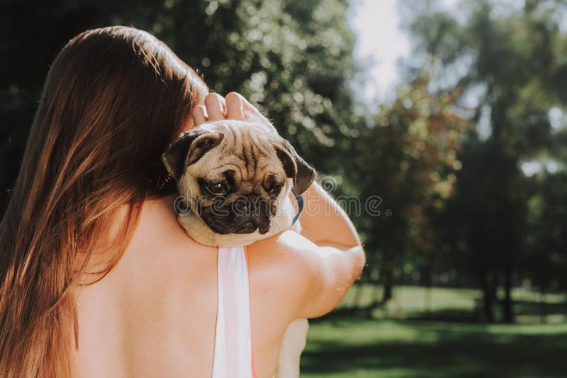 Young woman with little cute pug in her hands royalty free stock photo