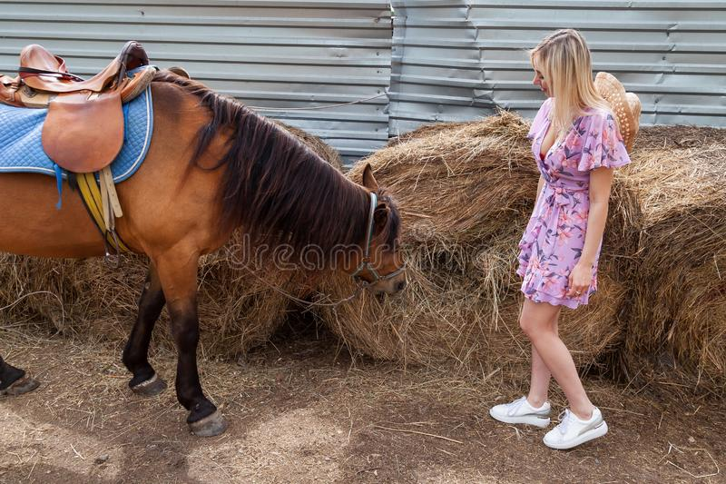 Young woman looking on a brown horse before a walk that eats hay near the haystack on a summer clear day royalty free stock image