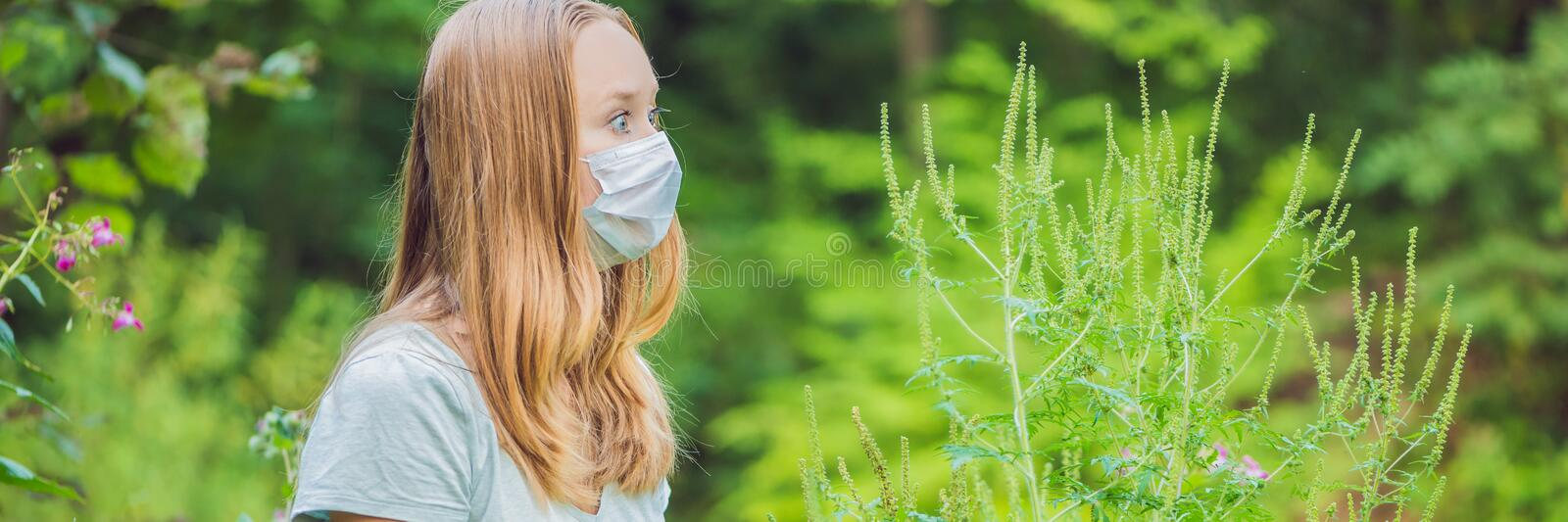 Young woman in a medical mask because of an allergy to ragweed BANNER, long format. Young woman in a medical mask because of an allergy to ragweed. BANNER, long royalty free stock photography