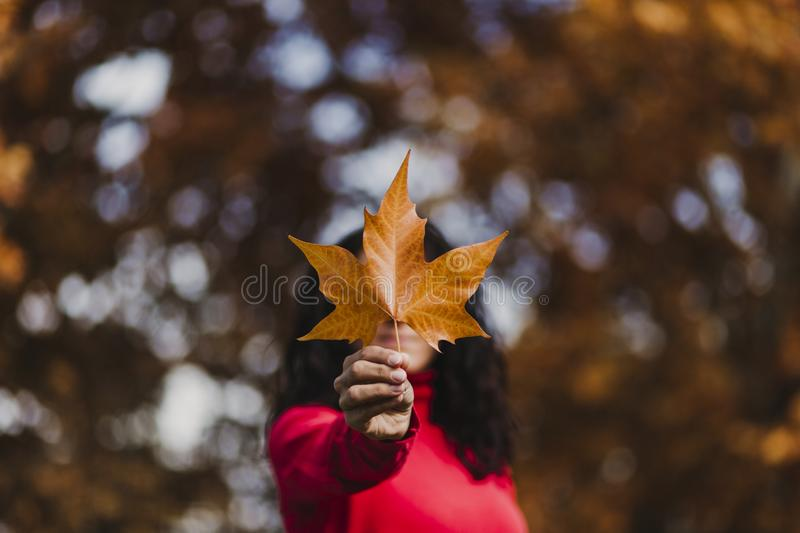 Young woman outdoors in a park holding a brown leave. Autumn concept. Selective focus stock image