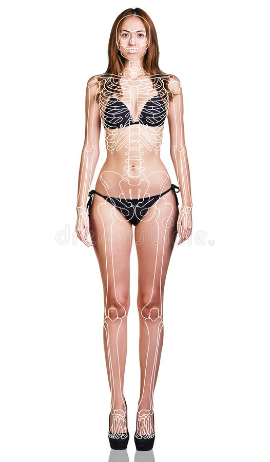 Young woman with paint skeleton on her body. royalty free stock photography