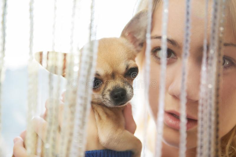 Young woman with pet dog stock photography