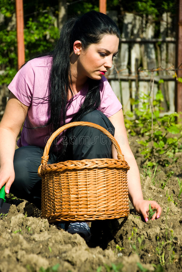 Download Young Woman Planting In A Garden Royalty Free Stock Images - Image: 14328769