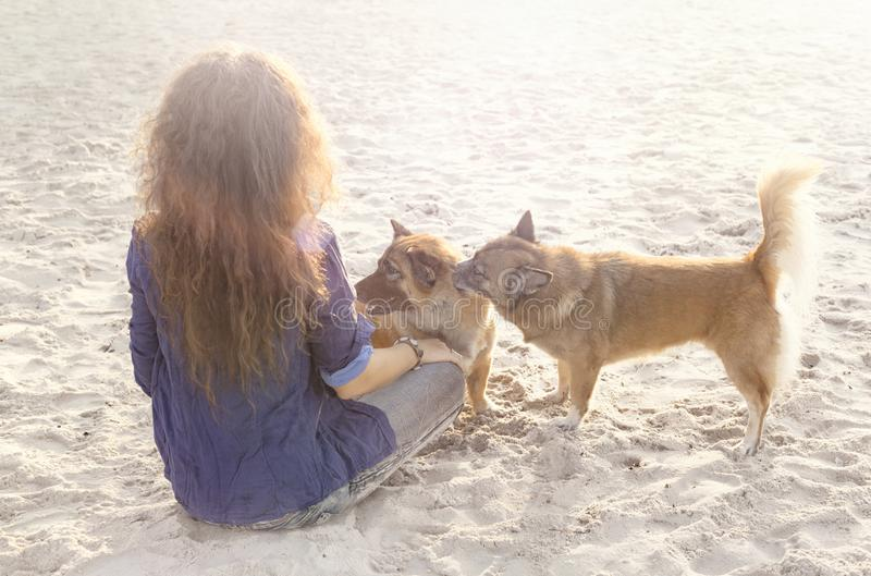 Young woman playing with dogs on the beach at sunset stock image