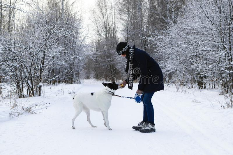 Young woman is playing with her black-white dog on a walk in winter forest royalty free stock photos