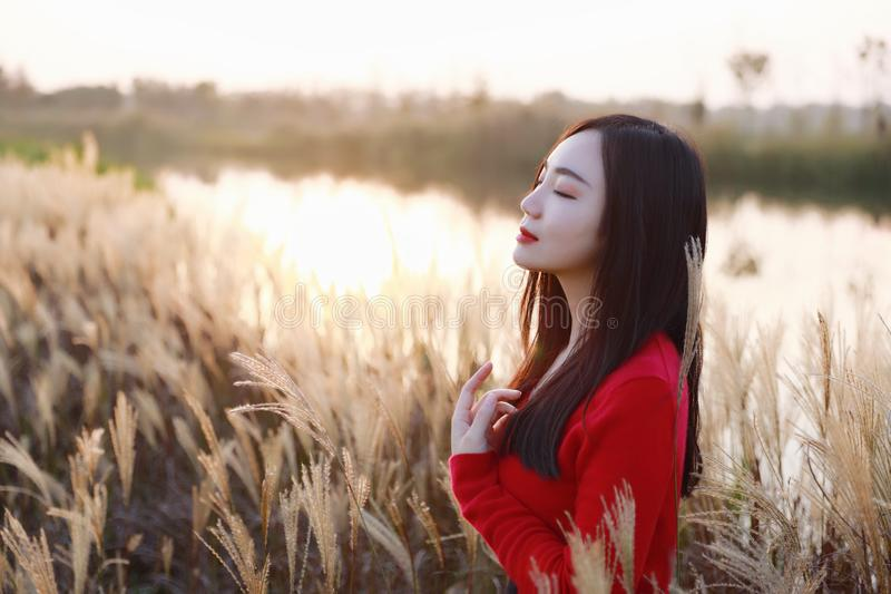 Enjoy in autumn sun , Young pretty woman stand on the grass and smiling at autumn sunset. Nature, natural. stock images