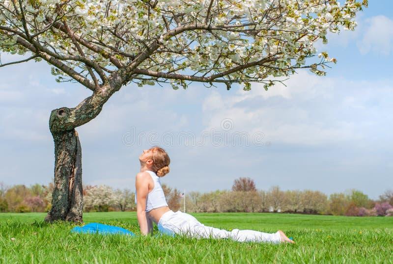 Young woman is practicing yoga, doing Cobra exercise, Bhujangasana pose royalty free stock image