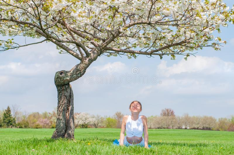 Young woman is practicing yoga, doing Cobra exercise, Bhujangasana pose stock photography