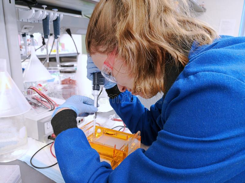 Young woman researcher loading amplified DNA samples to agarose gel stock photography