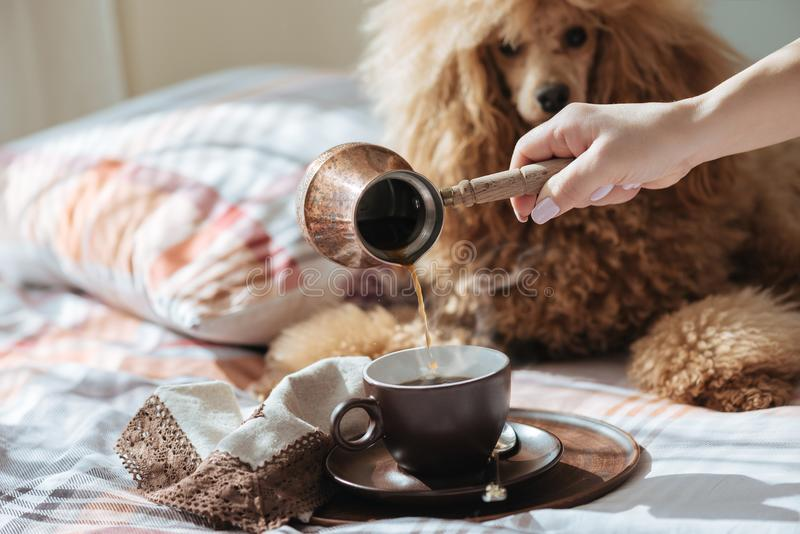 Young woman is resting with a dog on the bed at home and pouring coffee into a cup. stock images