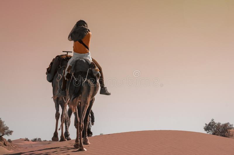 Young woman riding on a dromedary in the Moroccan sand desert stock photos