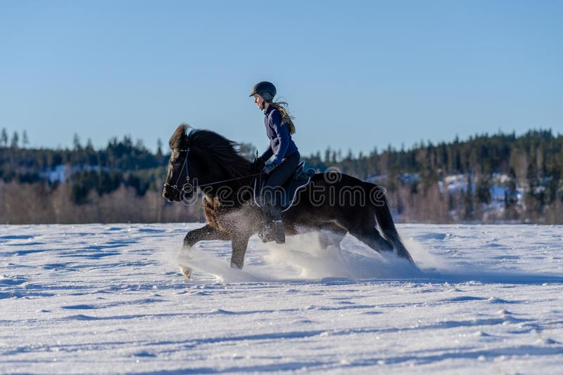 Young woman riding her Icelandic horse in deep snow royalty free stock photo