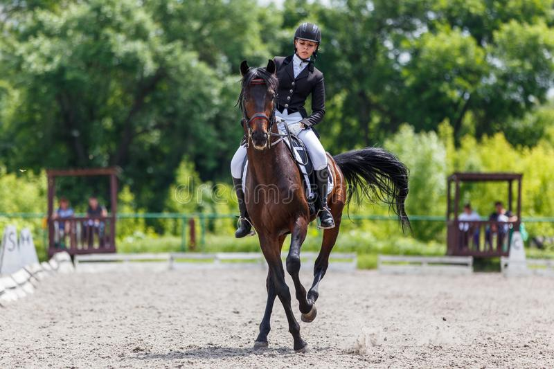 Young woman riding horse on dressage advanced test. Young woman riding horse on equestriansport competition in dressage advanced test royalty free stock image