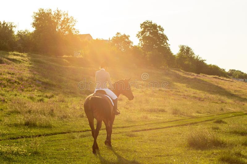 Young woman riding a horse on the green field. Sun flare. Young woman riding a horse on the green field. Horseback Riding. Competition. Hobby. Sun flare royalty free stock photos