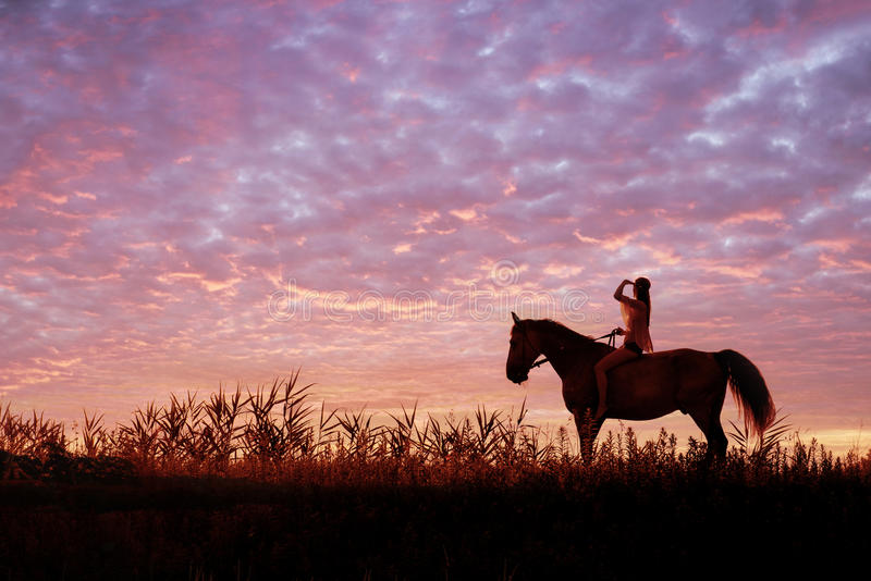 Young woman riding a horse on the meadow stock photos