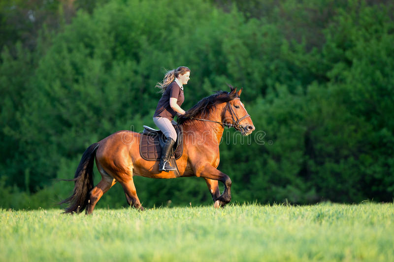 Young woman is riding a horse in summertime. Horseback riding. Young woman is riding a horse in summertime. Girl with horse runs fast in field. Horse rider stock photo