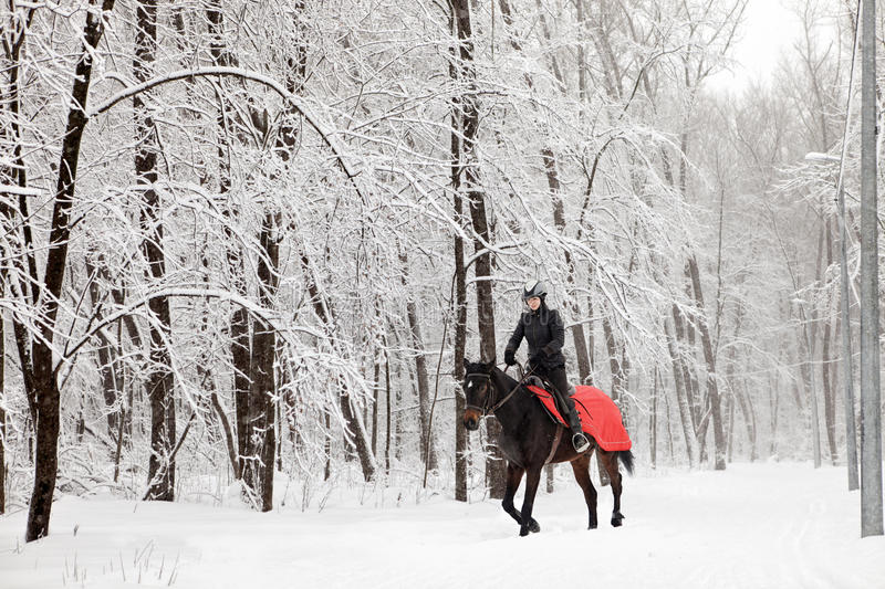 Young woman riding horse on a winter meadow stock photo