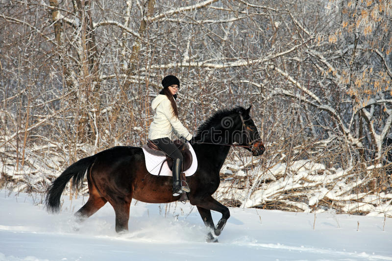 Young woman riding horse in winter woods stock photos