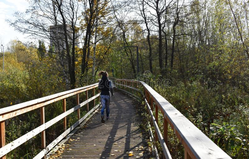 Young woman running the park. Wooden bridge and flooring with railing. Autumn sunny weather, yellow birch leaves forest stock photography