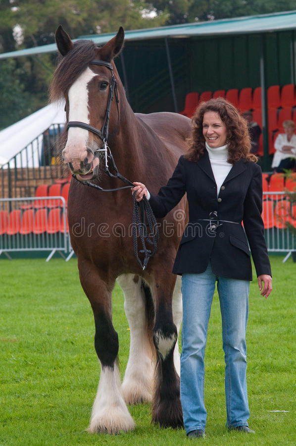 Free Young Woman Showing A Shire Horse Royalty Free Stock Photo - 16023495
