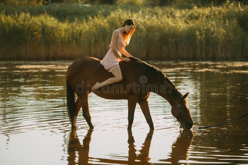 Woman sits astride a horse that drinks water. A young woman sits astride a horse that drinks water from a river royalty free stock photo
