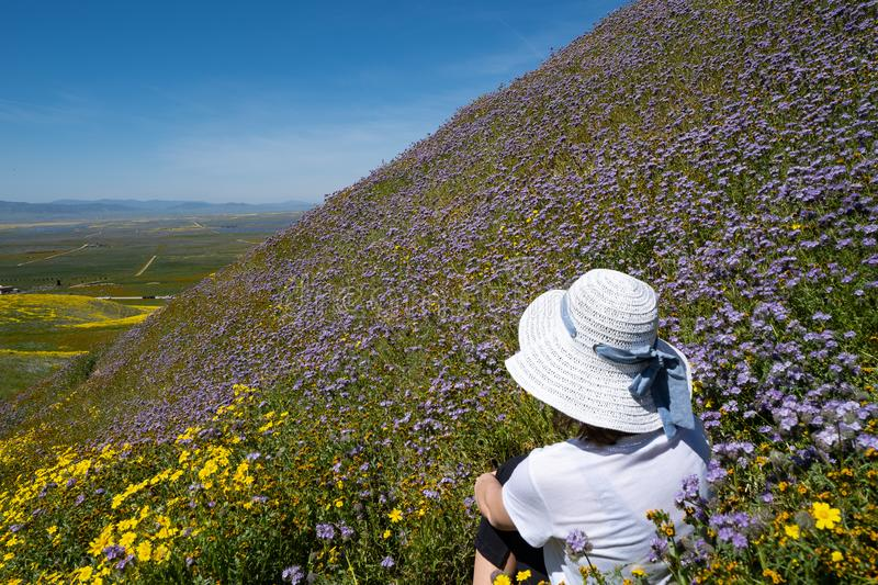 Young woman sits in a field of purple wildflowers on a steep hillside, looking out to the beautiful spring scenery stock image
