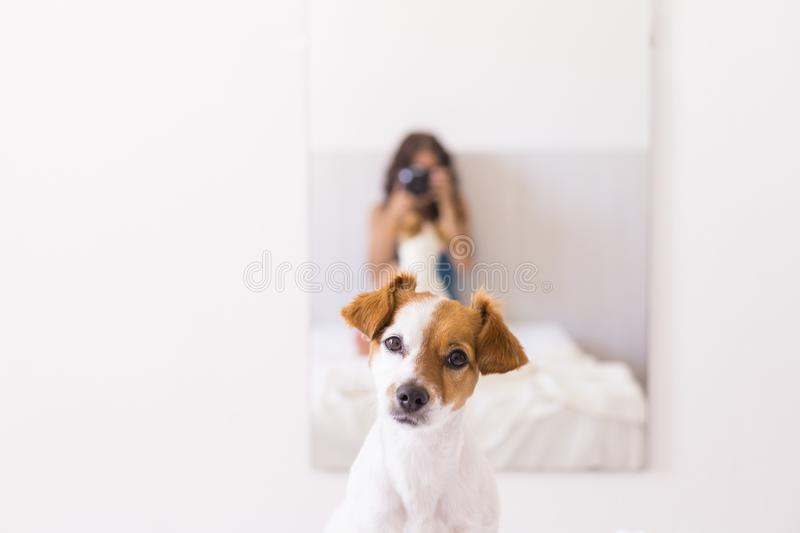 Young woman sitting on bed and taking a picture with a reflex camera to her cute small dog on the mirror. Daytime. LIfestyle with royalty free stock photo