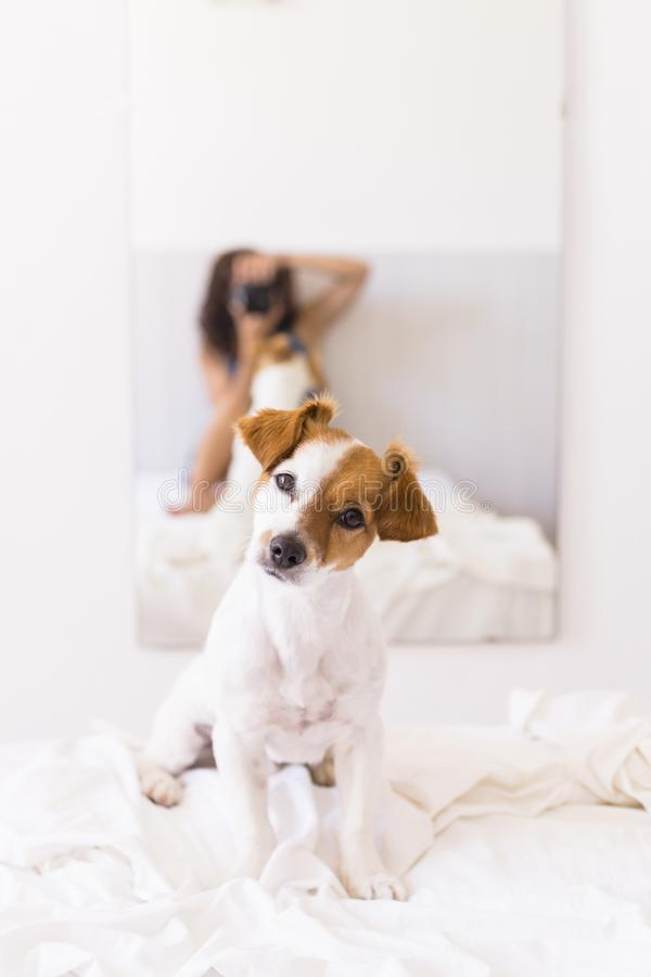 Young woman sitting on bed and taking a picture with a reflex camera to her cute small dog on the mirror. Daytime. LIfestyle with royalty free stock image