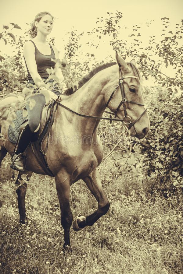 Young woman sitting on a horse. Animal, horsemanship concept. Young woman sitting and ridding on a horse through garden on sunny spring day, sepia stock image