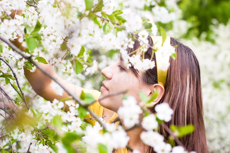 Young woman smelling spring cherry flowers stock photo