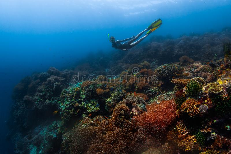 Young woman snorkeling royalty free stock photography