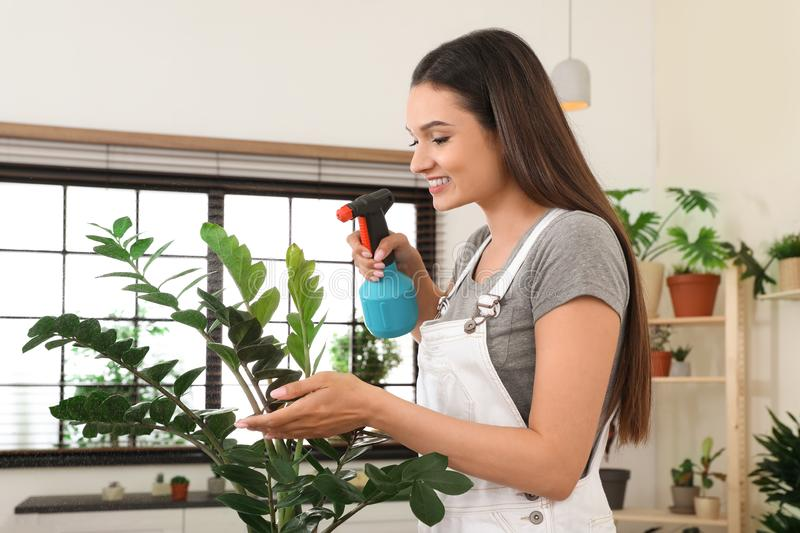 Young woman spraying plant with water. At home stock photo