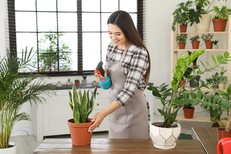 Young woman spraying plant with water. At home royalty free stock image