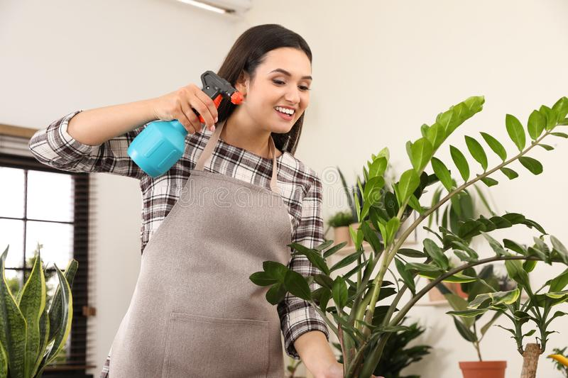 Young woman spraying plant with water. At home stock photos