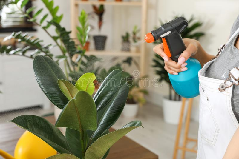 Young woman spraying plant with water at home. Closeup stock photos