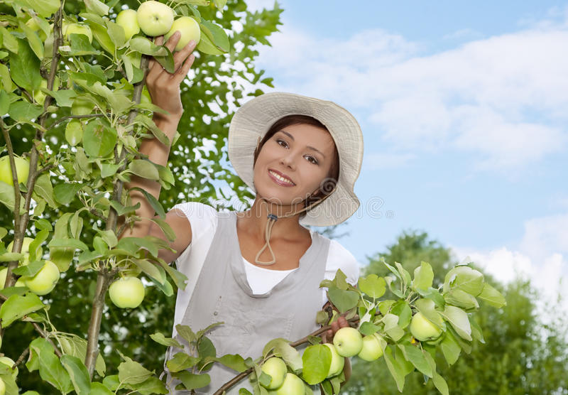 Download Young Woman Standing At Apple Tree Stock Photo - Image of harvesting, caucasian: 18765858