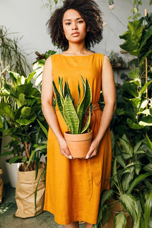 Young woman standing in plant shop stock images