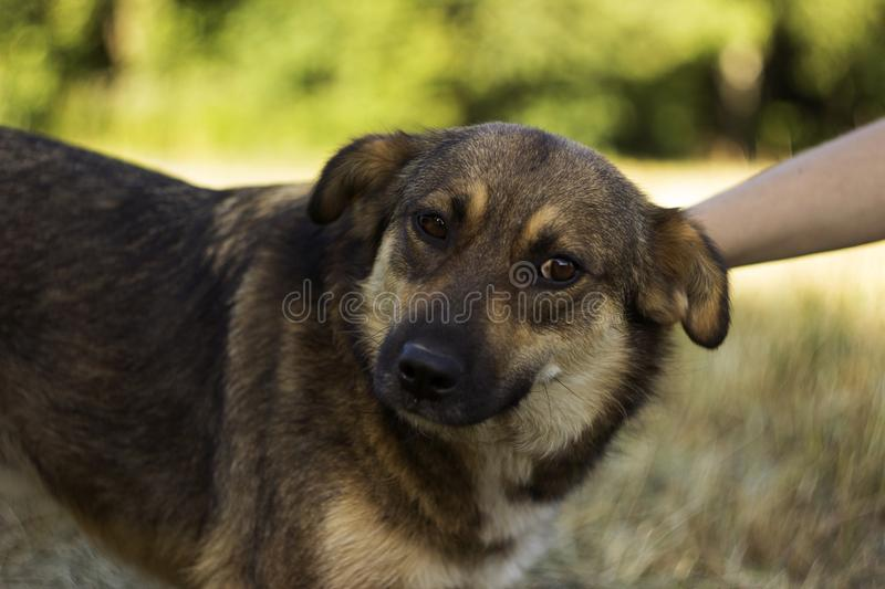 A young woman stroking a dog. The happy animal rejoices, the concept of love and friendship.  royalty free stock image