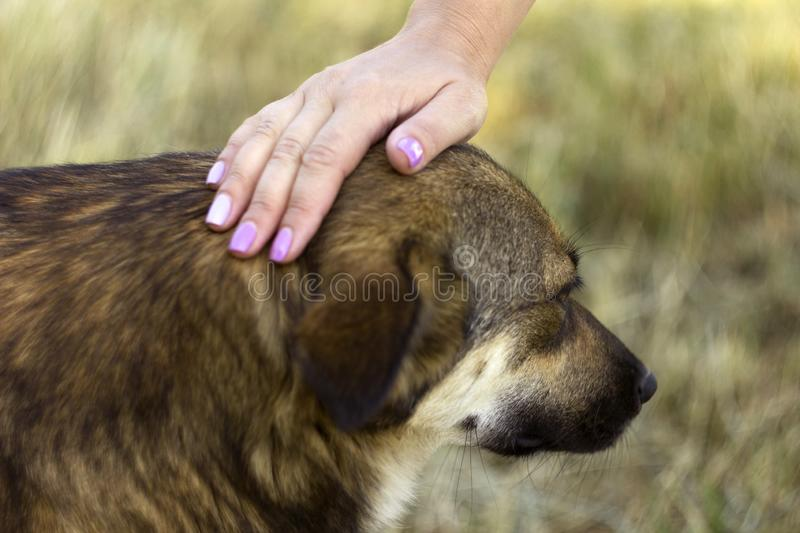 A young woman stroking a dog. The happy animal rejoices, the concept of love and friendship. Blured.  stock photography
