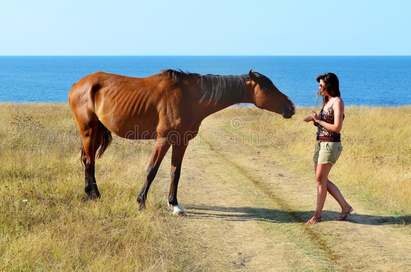 Woman with Beautiful Red Horse on the Beach. Young woman stroking a red horse grazing in the meadow on the sea stock photography