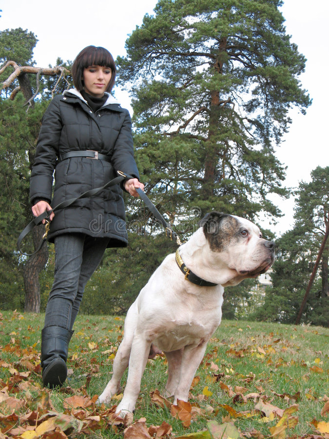 Young woman and strong dog stock photography