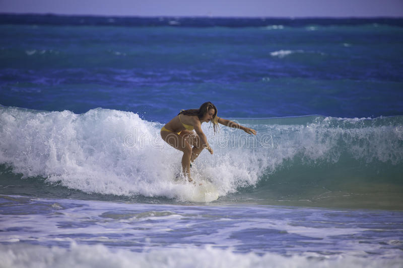 Download Young Woman Surfing In Hawaii Stock Photo - Image: 23021754