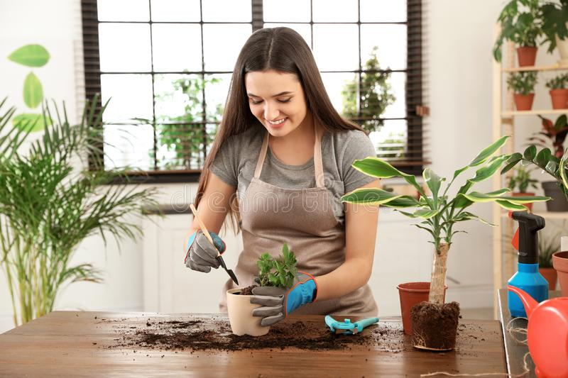 Young woman taking care of plant stock image