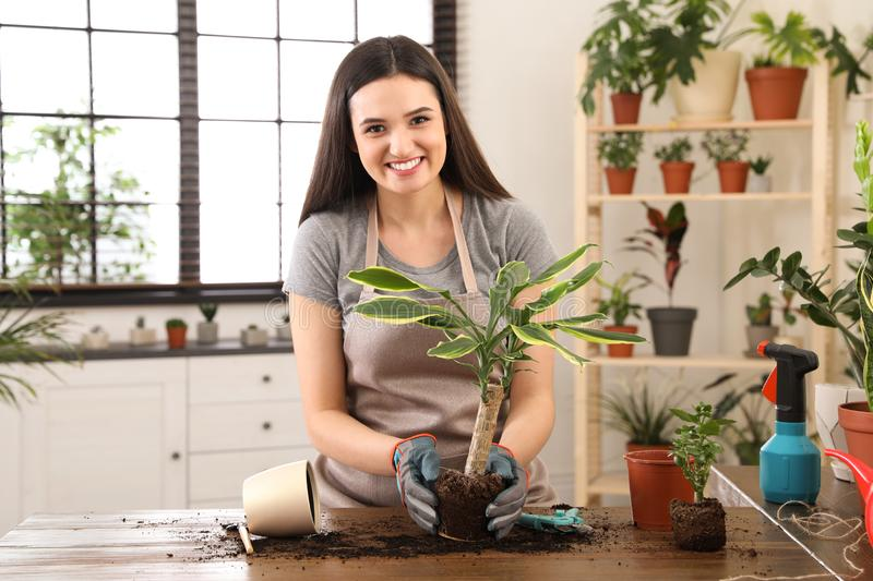 Young woman taking care of plant royalty free stock photos
