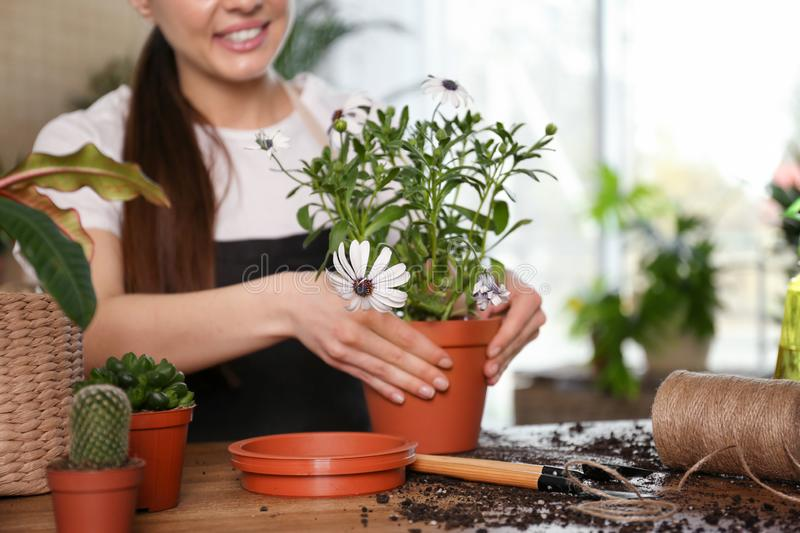 Young woman taking care of potted plants at home royalty free stock photos