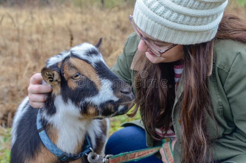 Young woman with a tan, white and black Dwarf Nigerian goat royalty free stock photography
