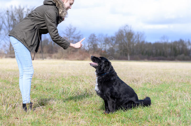 Young woman teaching her dog to sit and stay. Young woman teaching her cute loyal black dog to sit and stay in an obedience class outdoors in a rural field royalty free stock photos